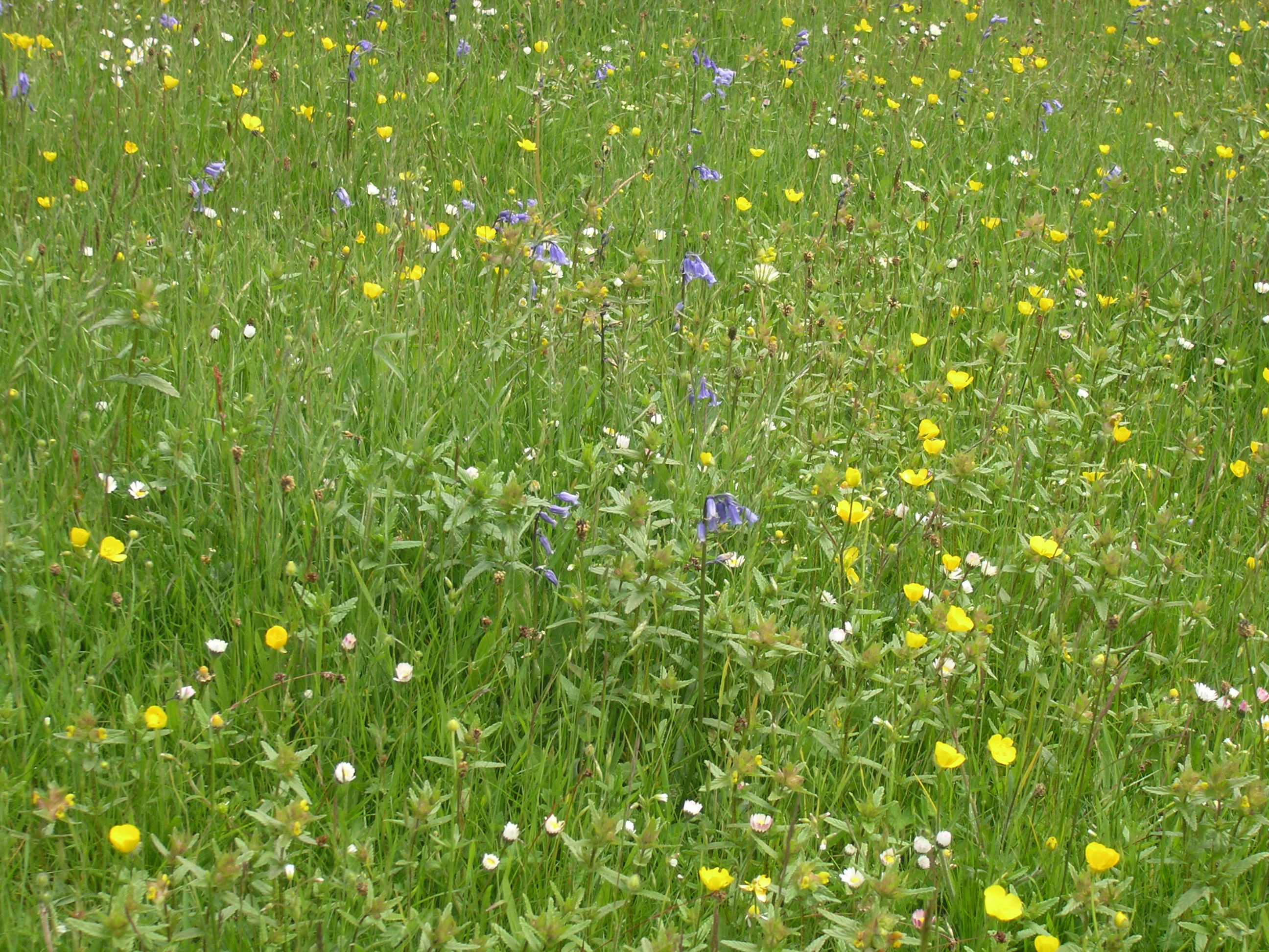 Lower winskill home page for Grass like flowering plants